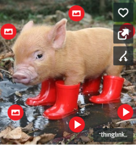 Here's a simple picture of a teacup pig - it's been made almost educational with the use of the buttons around it.